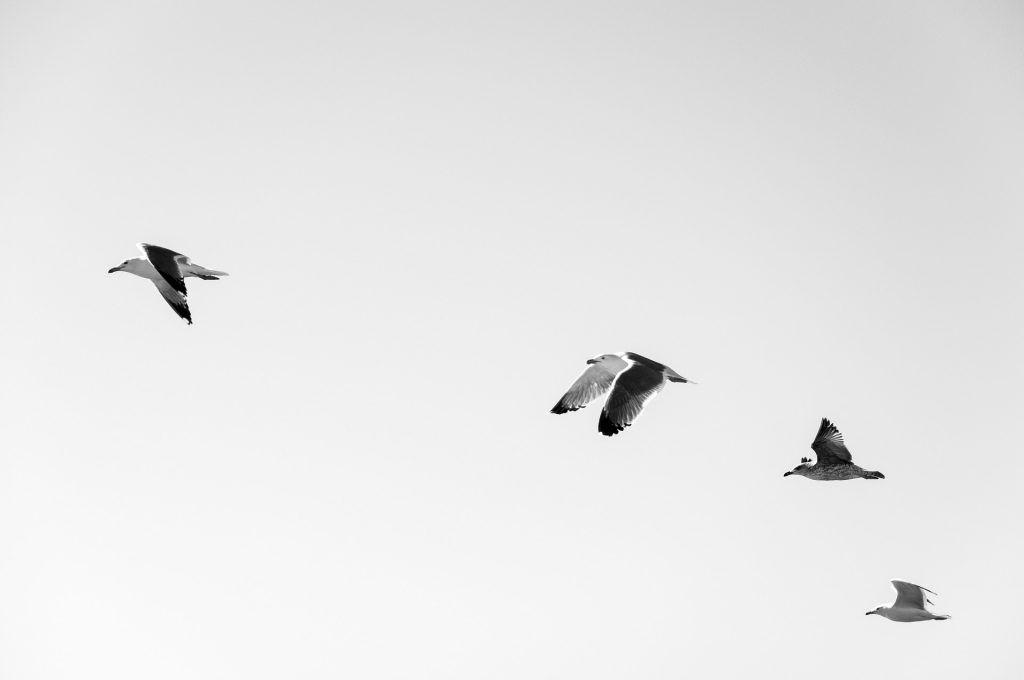 María Robles Aerofobia o miedo a volar